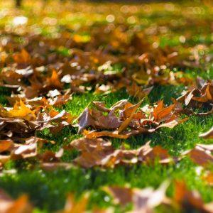 Those Leaves